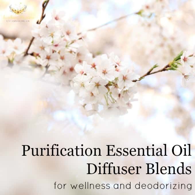 Purification Essential Oil Diffuser Blends